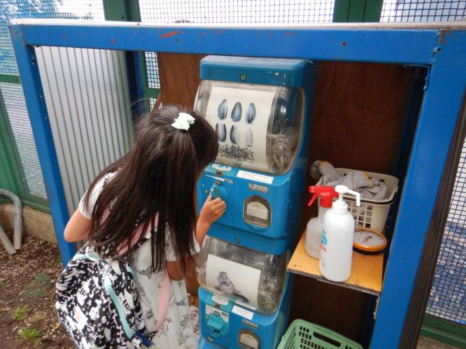 シマリスのエサはガチャガチャで1カプセル200円で販売