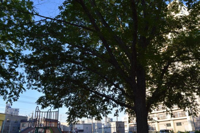 公園内には木々が多い
