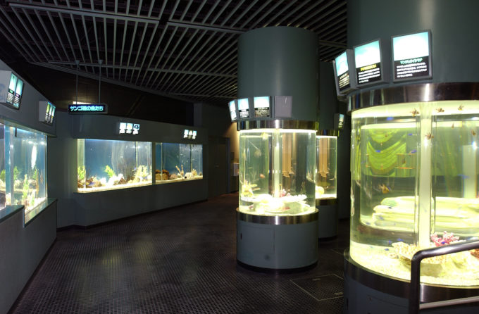 サンゴ礁の魚たちと円筒水槽群