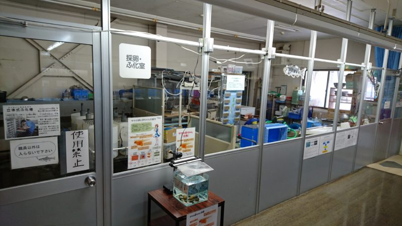 採卵ふ化室