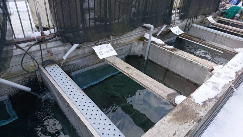 各水槽ごとにエサの種類の掲示