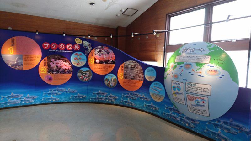 サケの成長と回遊ルートの展示