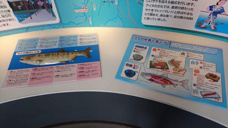 サケの体の仕組み、栄養と食べ方の解説