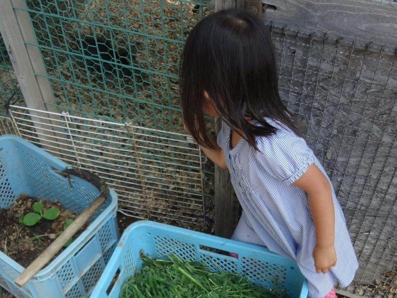 餌はウサギ小屋の横に設置