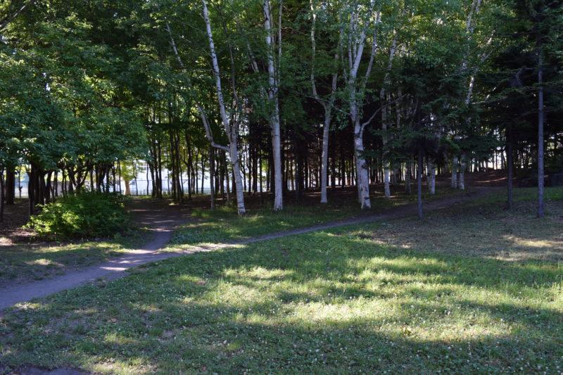 沢山の木々がある伏古公園
