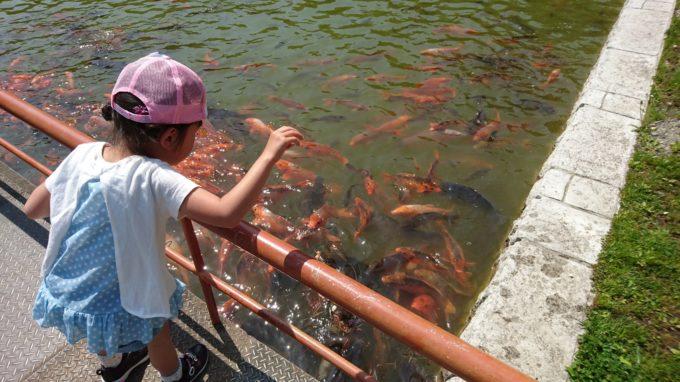 本別公園鯉にえさやり