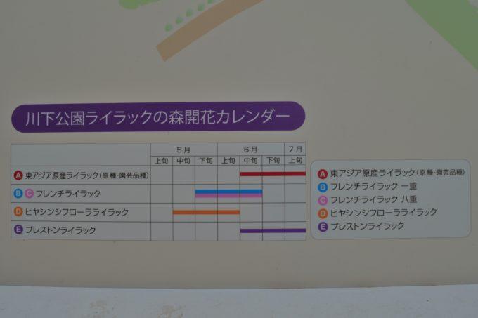 川下公園ライラックの開花カレンダー