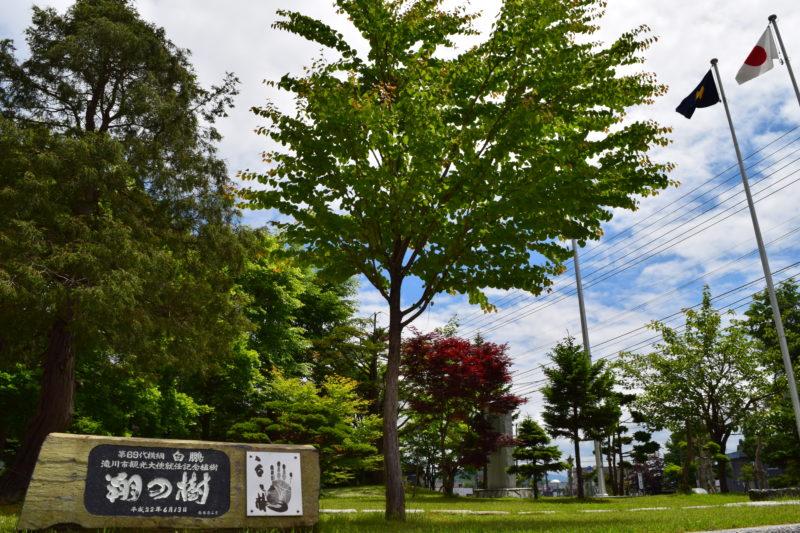 第69代横綱白鵬が滝川市観光大使就任した際の記念イベントで植樹されたカツラの木。