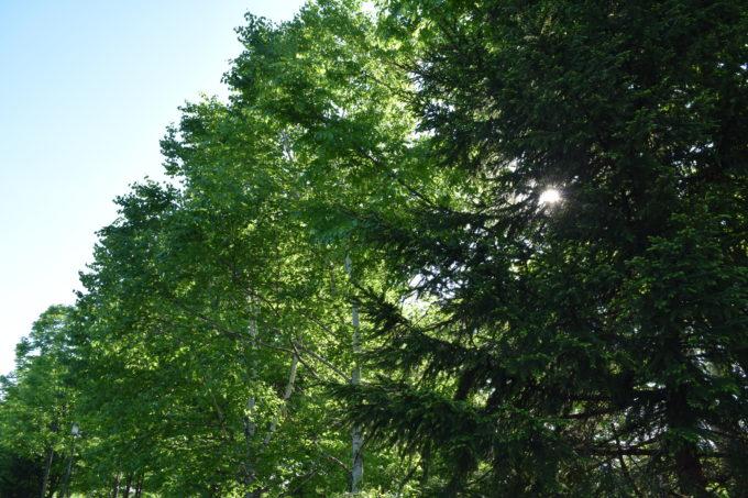 忠和公園ジョギングコース