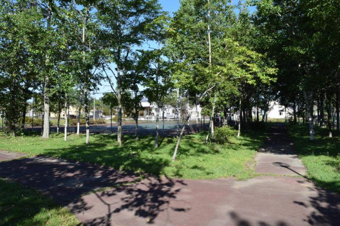木々が多い遊歩道
