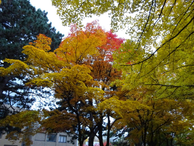Googleストリートビューでキャンパス内を見学できる北海道の大学・短大
