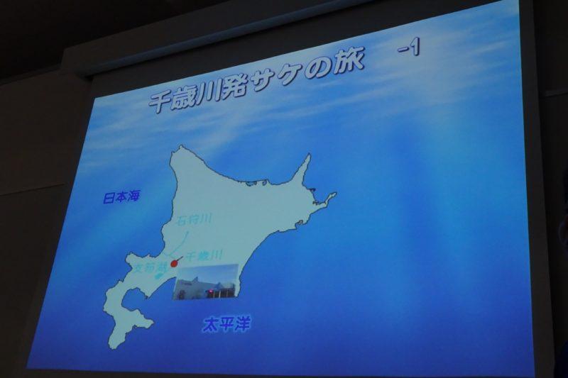 サケ稚魚放流体験