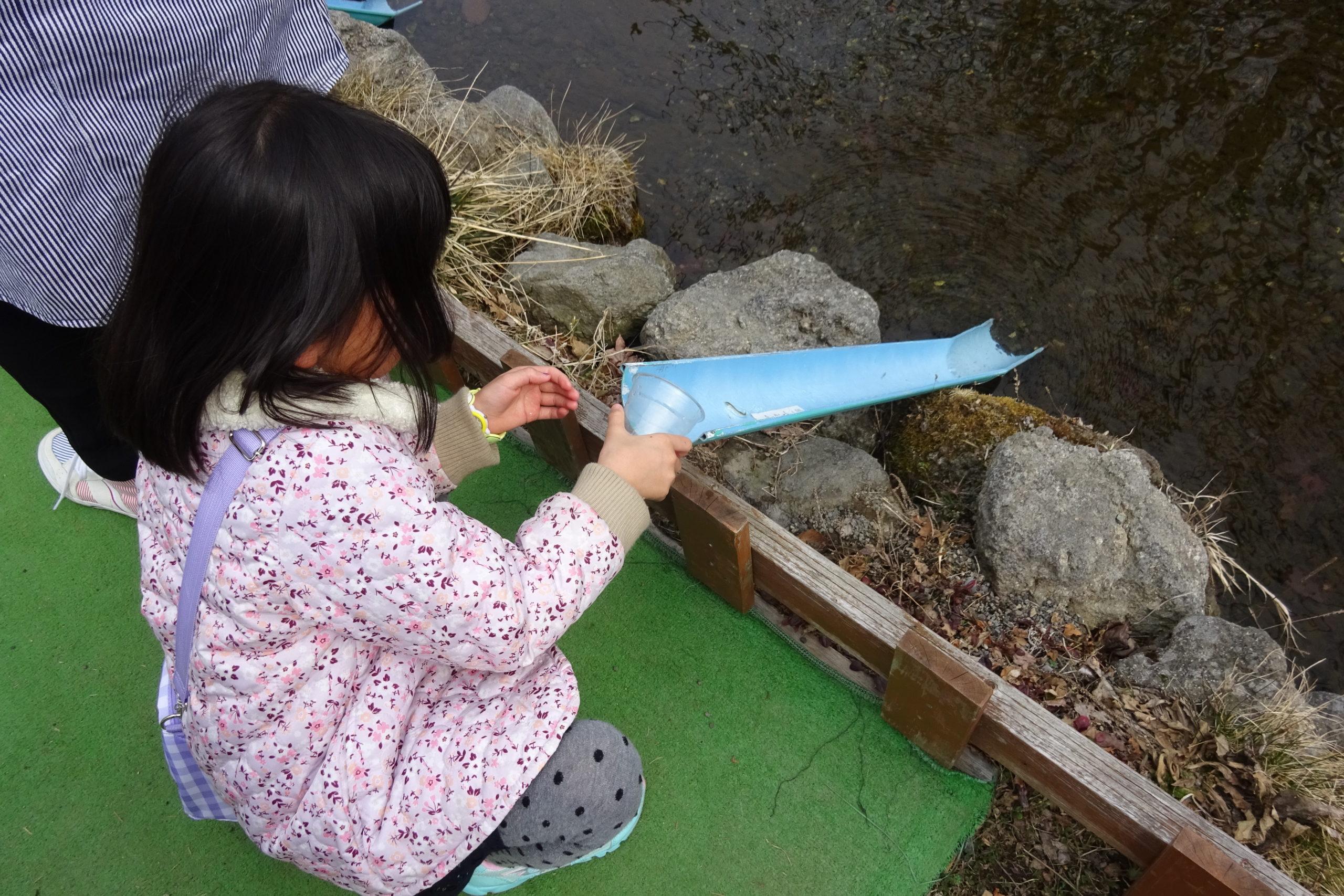 サケの稚魚を水路に流します