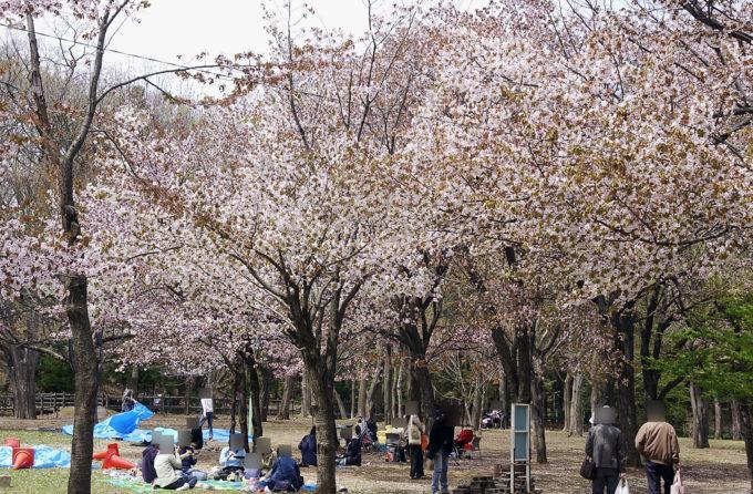 円山公園バーベキュー