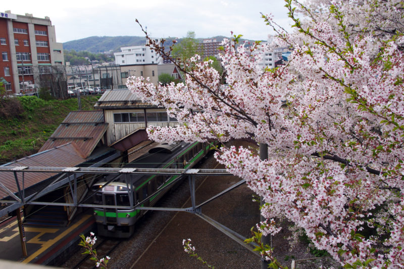 JR南小樽駅の桜