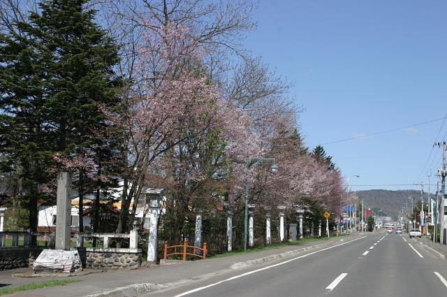 比布神社の桜