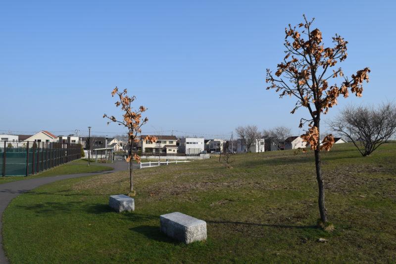 明日風公園の紅葉