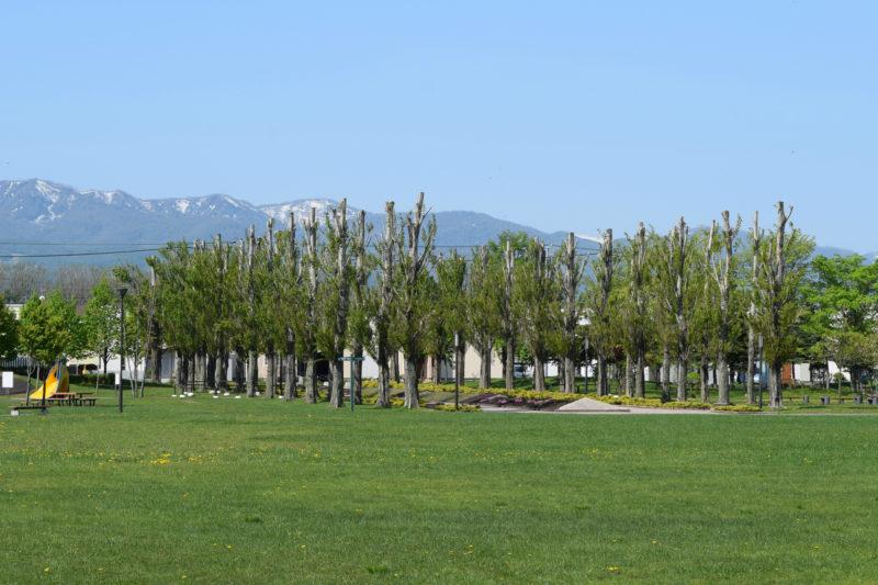 石狩ふれあいの杜公園のポプラ並木