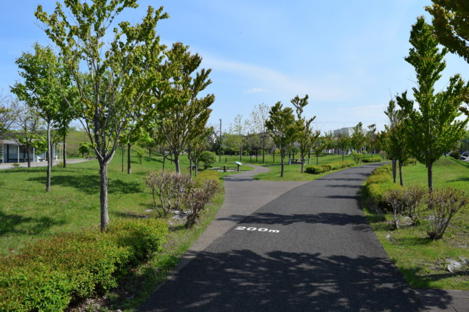 石狩ふれあいの杜公園の遊歩道