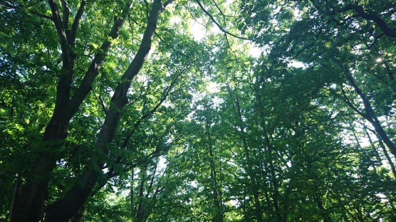 北海道札幌市北区の公園・緑地一覧