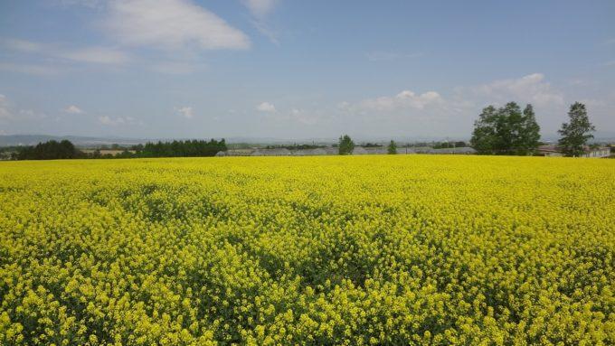 北海道滝川市の公園・緑地一覧