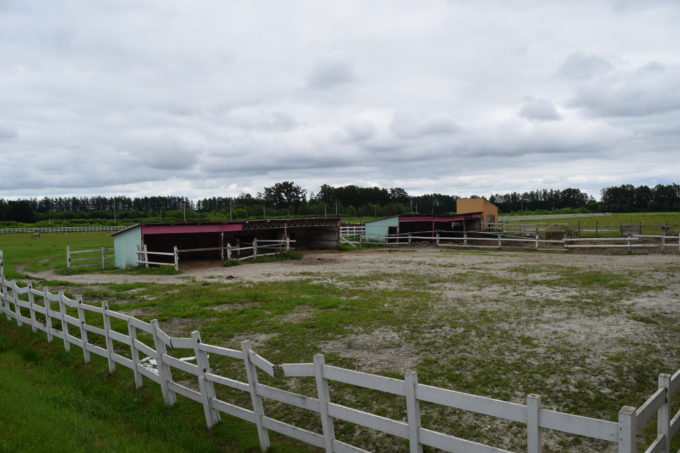 花畑牧場の馬舎・牛舎