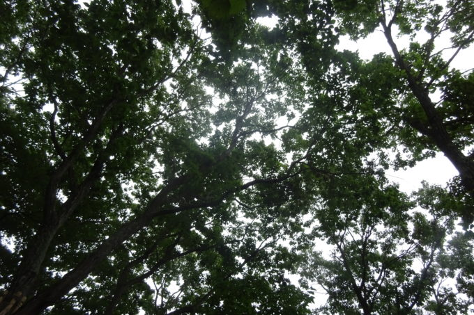 日差しが強い日でも木々が多いので直射日光が防げます