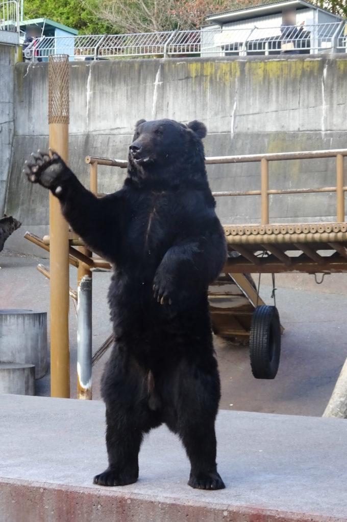 直立する熊