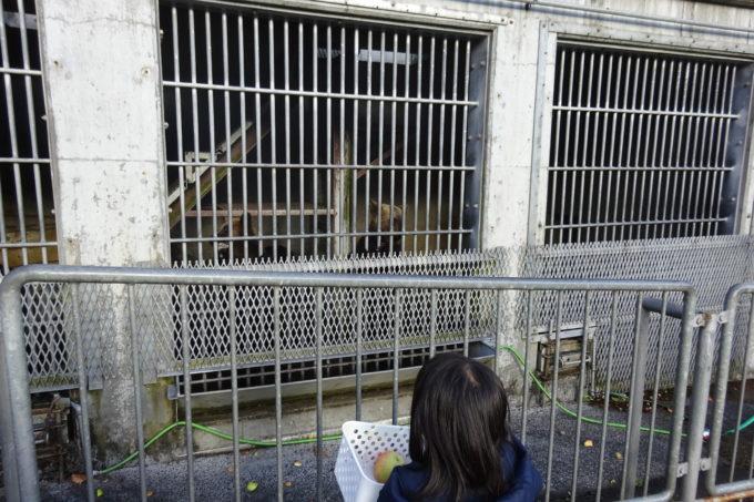 昭和新山熊牧場の1歳と2歳の熊がいるくまの小学校