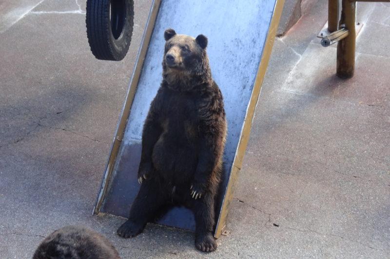 滑り台に腰掛ける熊