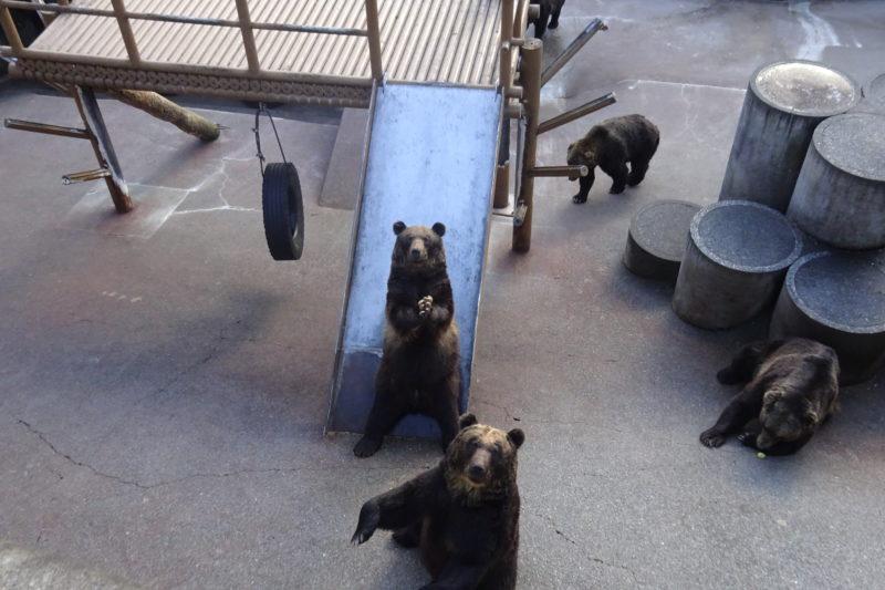 エサをおねだりする熊