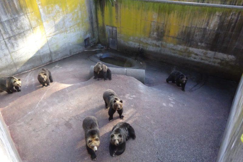 昭和新山熊牧場のエリート集団で構成されさまざまなポーズを披露