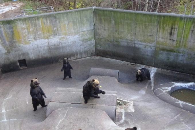 昭和新山熊牧場にいる3~4歳の熊