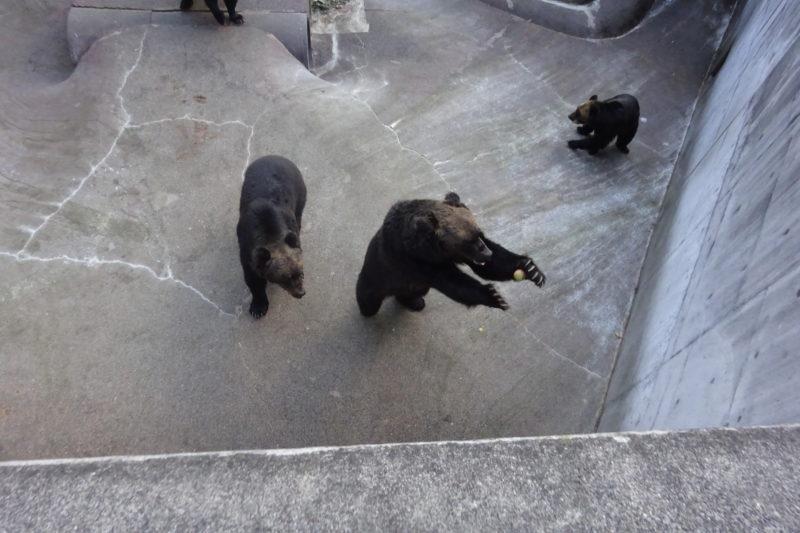 熊へ目がけてポイッと投げ込むとキャッチ