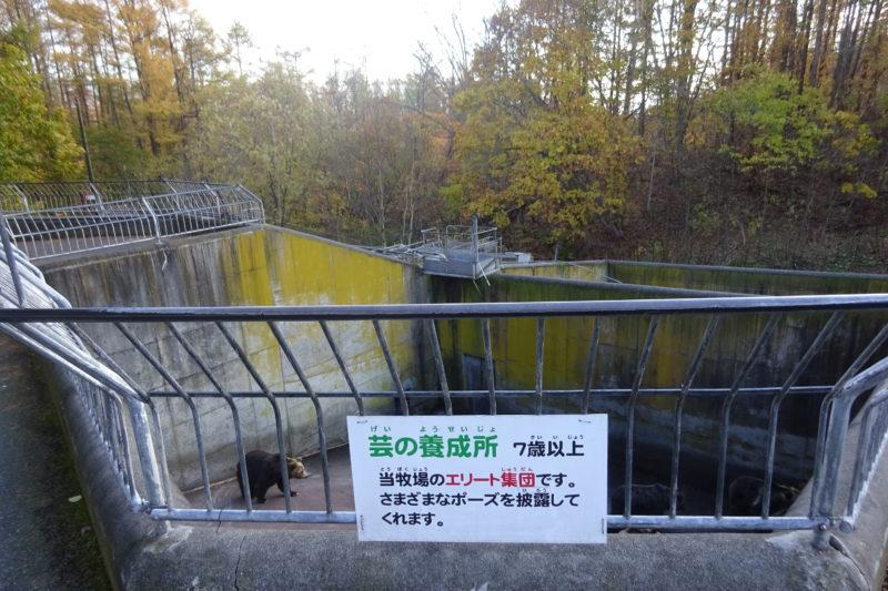 昭和新山熊牧場芸の養成所