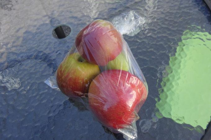 熊のえさとなる「りんご」
