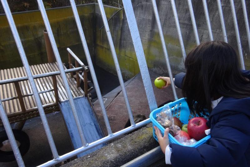 昭和新山熊牧場熊のえさやり体験