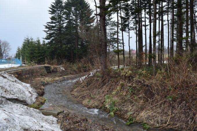 ヤクモ飲料沿いにある小川の下流側