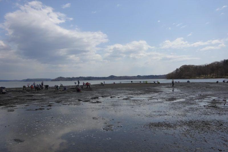 厚岸のアサリ漁場は広い