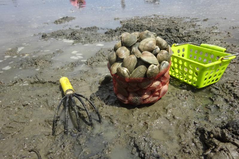 厚岸あさり掘り