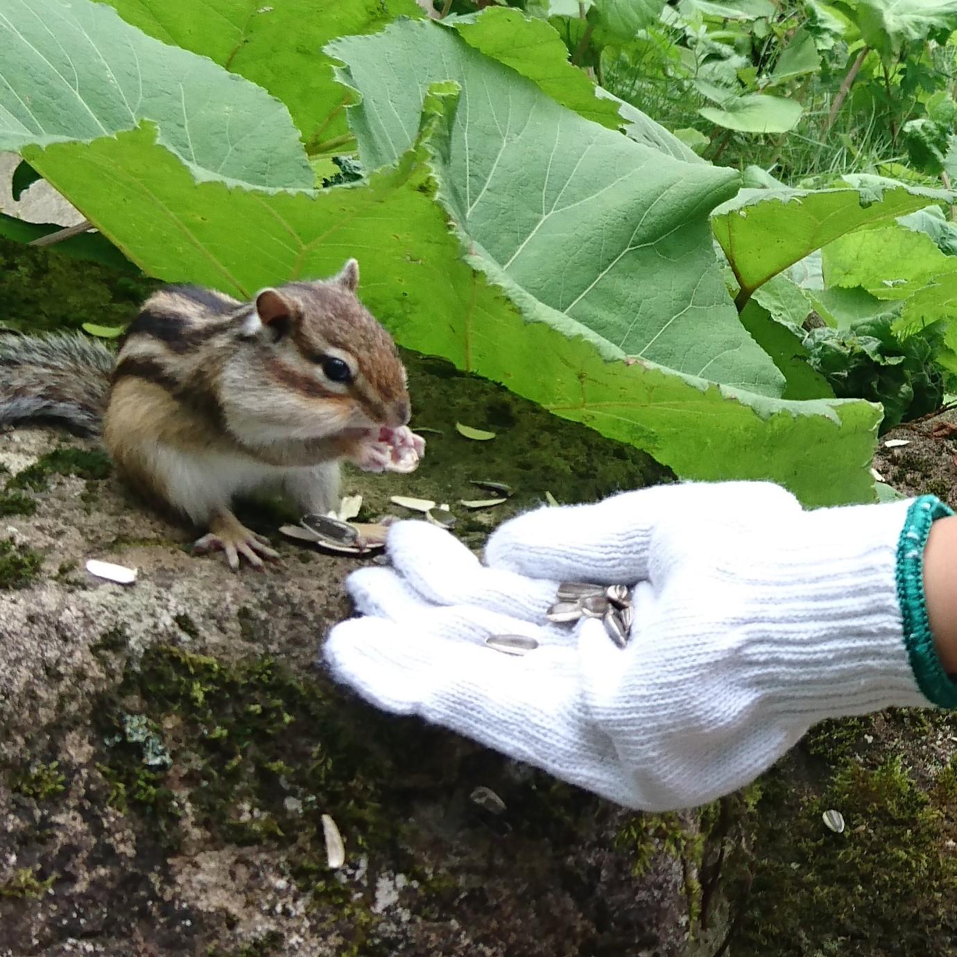 北海道でリスと触れ合い餌やりができる公園一覧