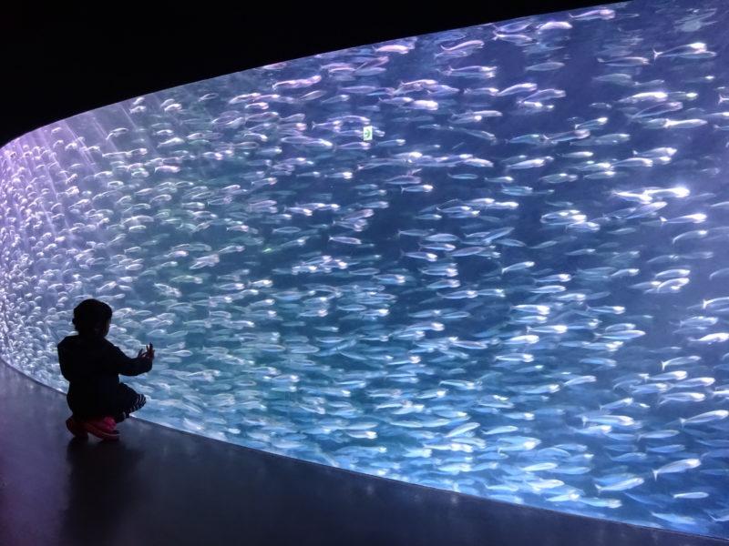 北海道の水族館一覧