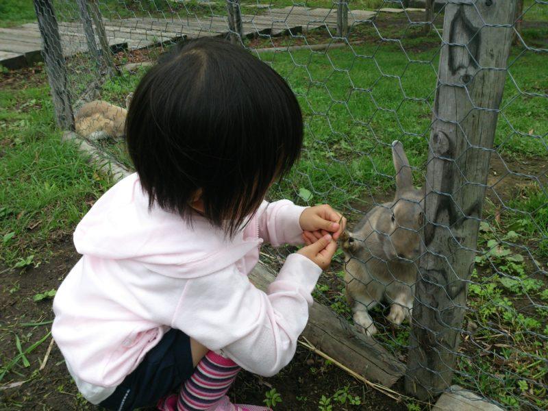 北海道の動物ふれあいスポット・エサやり体験スポット一覧