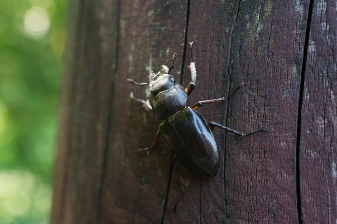 北海道の昆虫館一覧