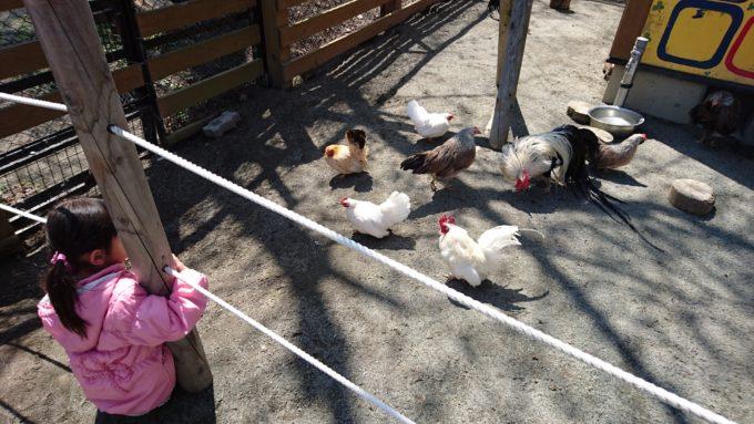 北海道の動物園一覧