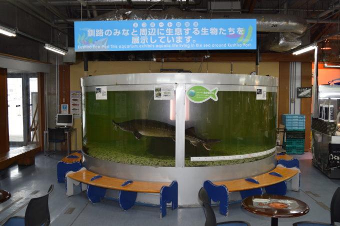 釧路フィッシャーマンズワーフMOOエコポート水族館