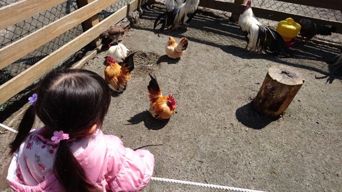 札幌市円山動物園「こども動物園」