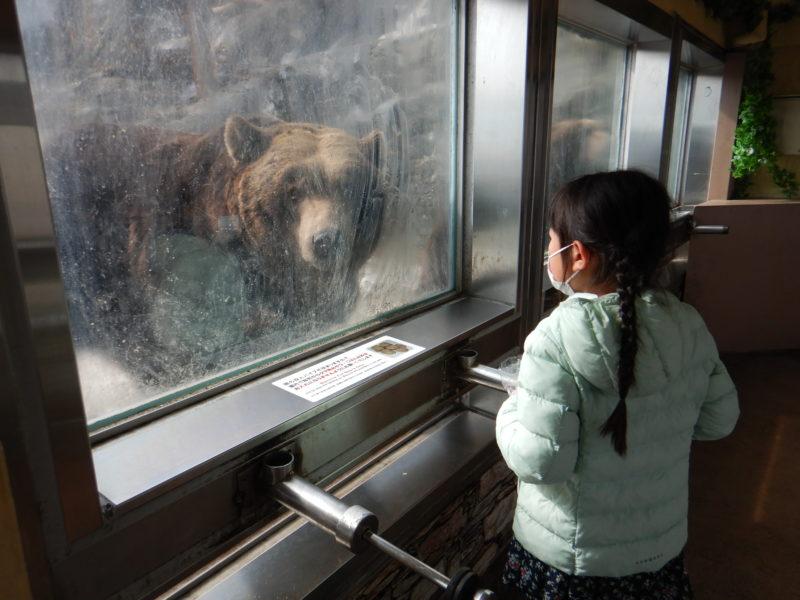 のぼりべつクマ牧場えさやり
