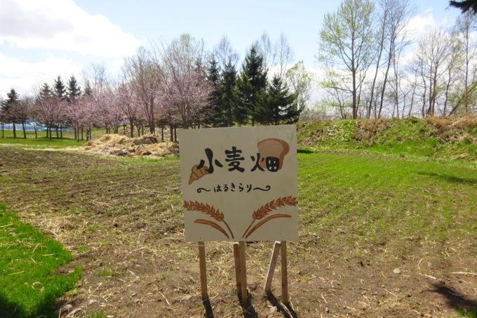 麦音の小麦畑