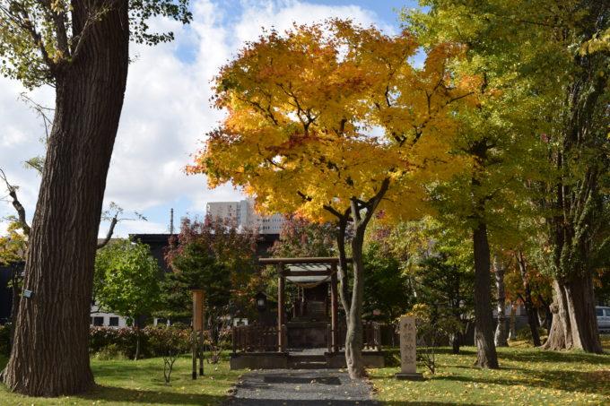 札幌神社の黄葉